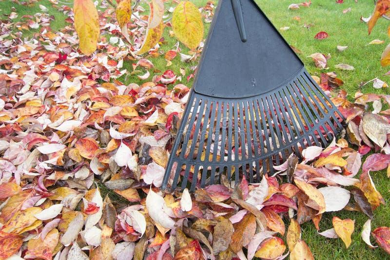 Сгребать листья падения в крупном плане сада стоковые изображения rf