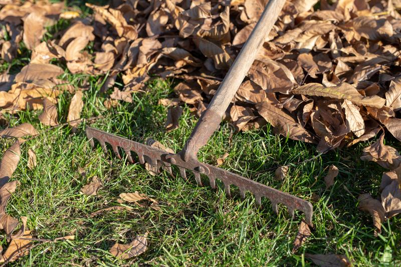 Сгребать сухие листья с садовничая инструментами Чистка осени на l стоковые изображения rf