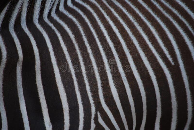 сделайте по образцу зебру стоковые изображения rf