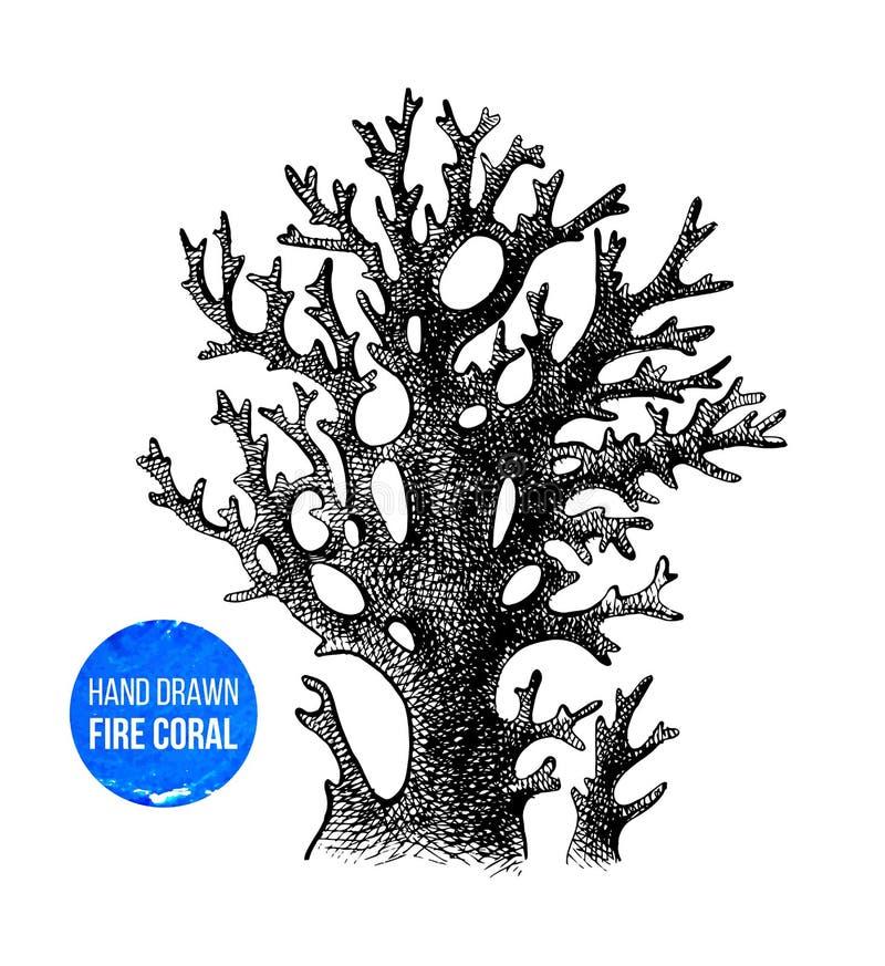 Сделанный эскиз к рукой коралл огня бесплатная иллюстрация