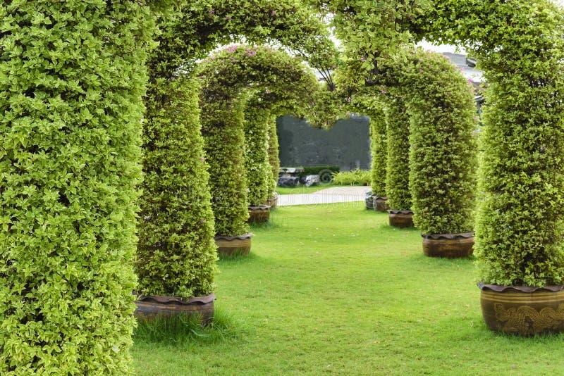 Сдобренное дерево на зеленой траве Просигнальте внутри стоковое изображение rf