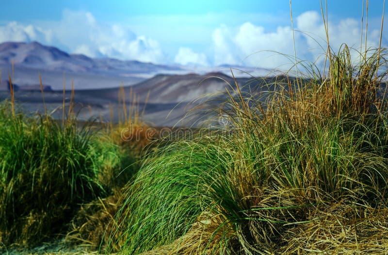 Северная Аргентина стоковое фото rf