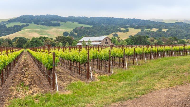 Северная калифорния виноградник & амбар стоковое изображение