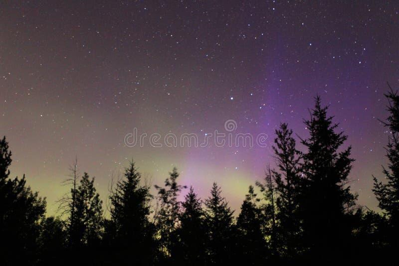 Северное сияние над лесом стоковая фотография rf