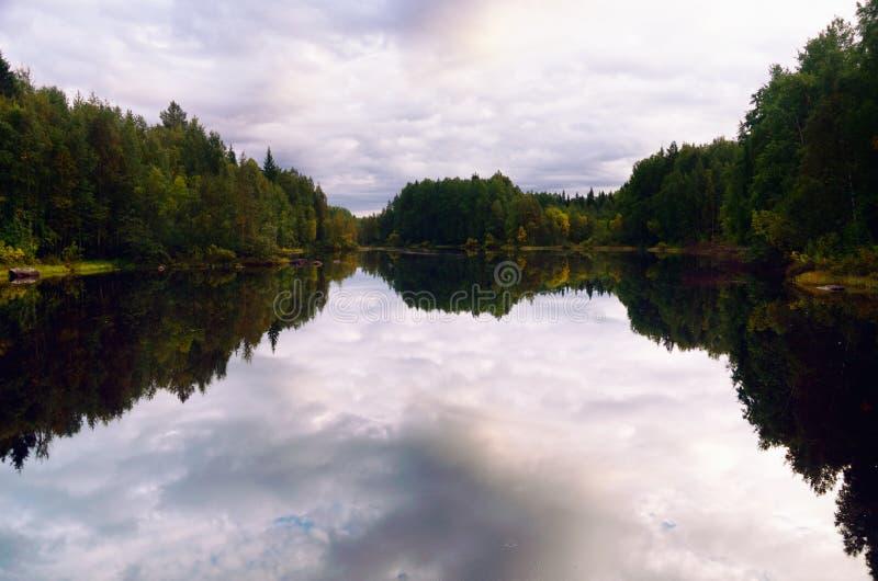Северный лес отраженный в воде стоковая фотография rf