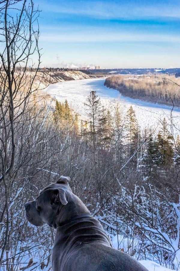 Северный Саскачеван River Valley в зиме, Эдмонтон стоковые изображения rf