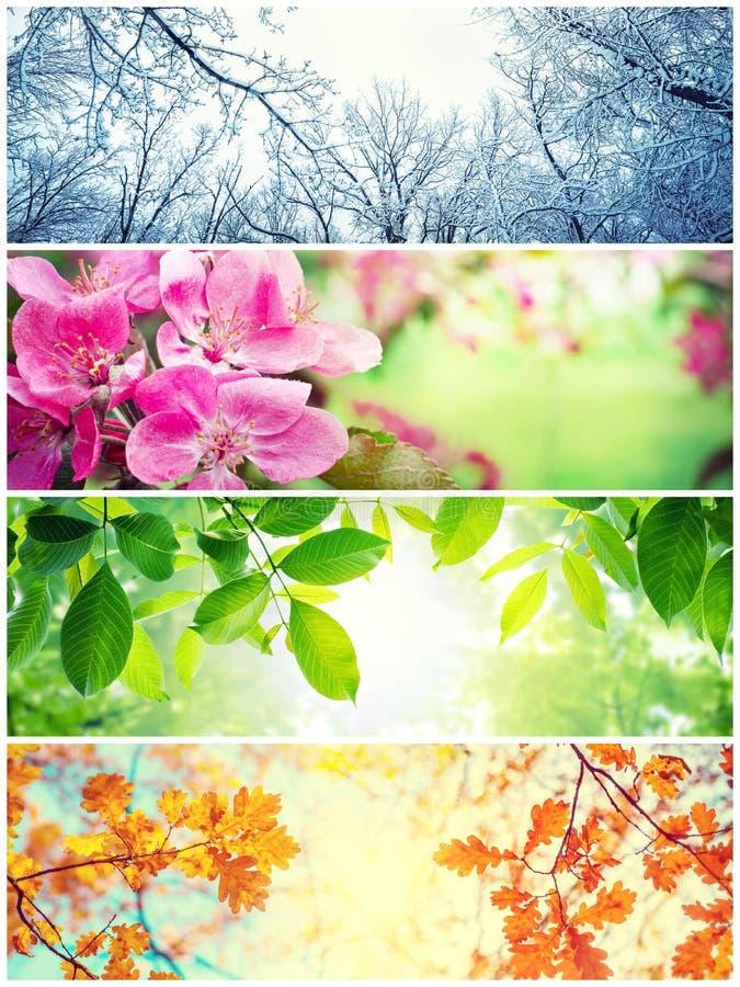 4 сезона Изображения которое показывает 4 различных изображения представляя 4 сезона стоковое фото