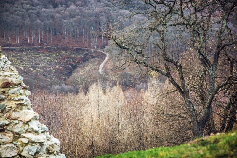 Сезонный лиственный лес и пустая дорога стоковая фотография rf