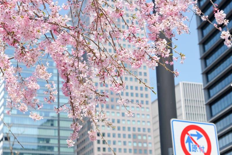 Сезон вишневого цвета стоковое изображение rf