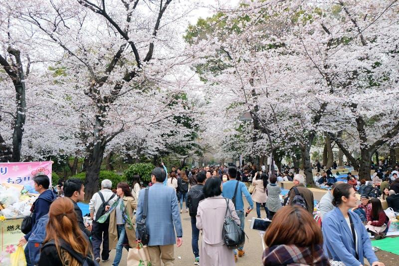 Сезон вишневого цвета стоковые изображения