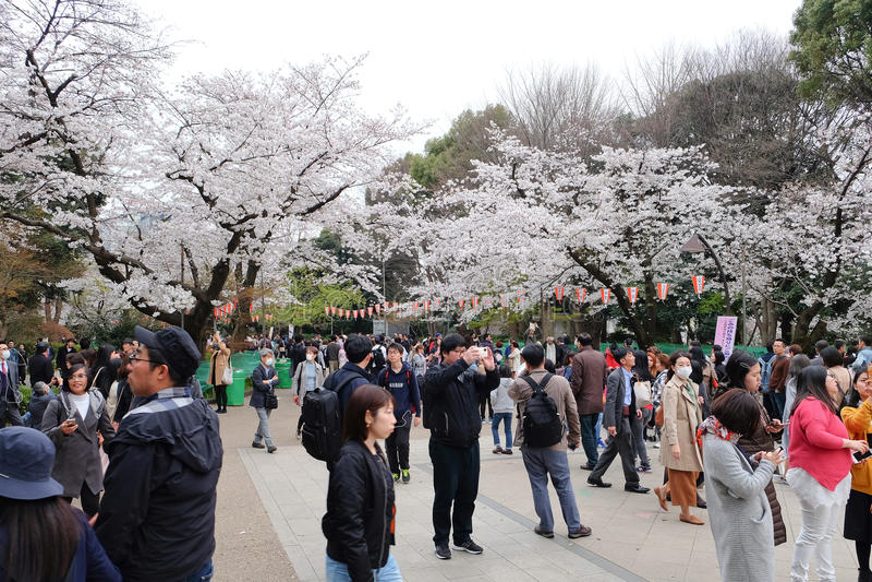 Сезон вишневого цвета стоковое изображение