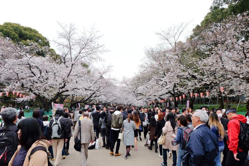 Сезон вишневого цвета стоковые изображения rf
