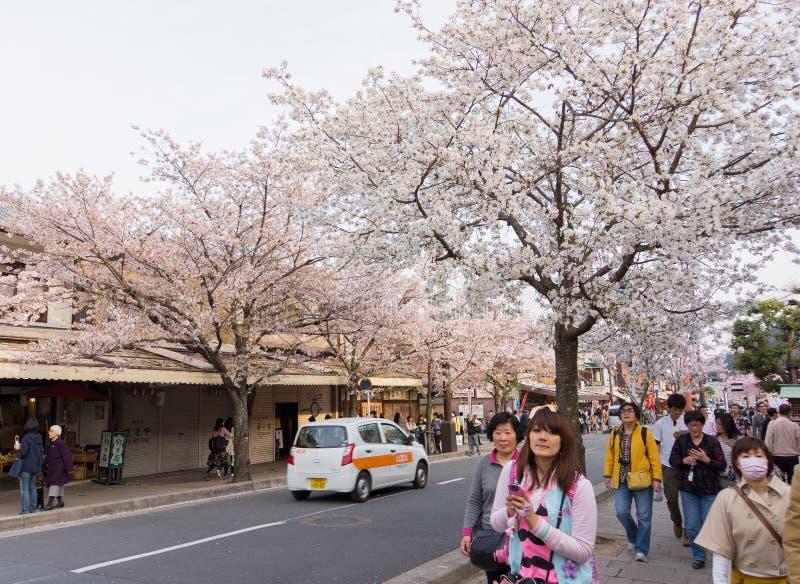 Сезон вишневого цвета ` s Японии стоковое изображение rf