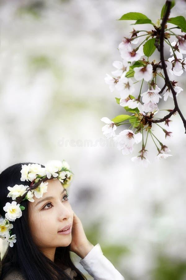 сезон вишни цветения стоковые изображения rf
