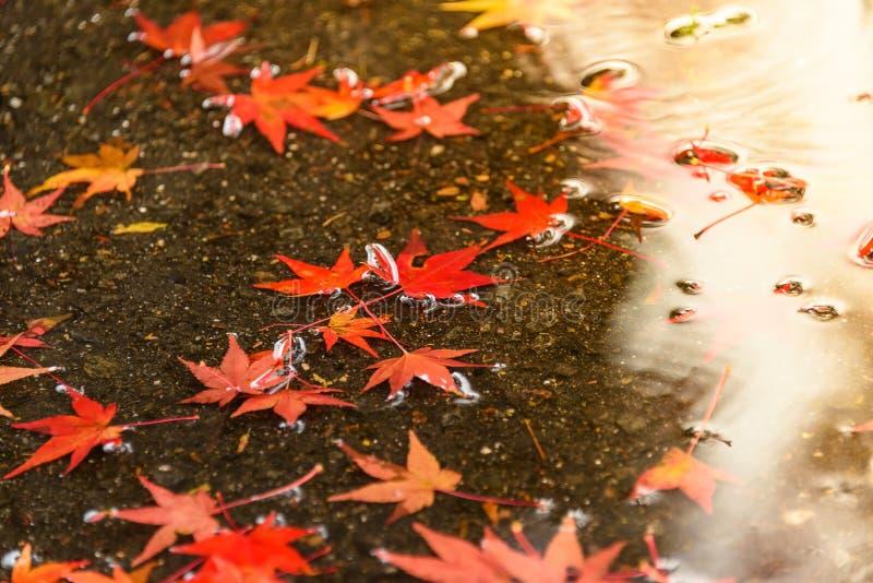 Сезон осени Киото стоковое фото rf