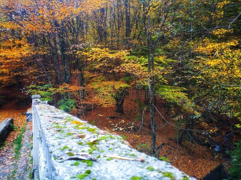 Сезон осени настолько красивый стоковое фото