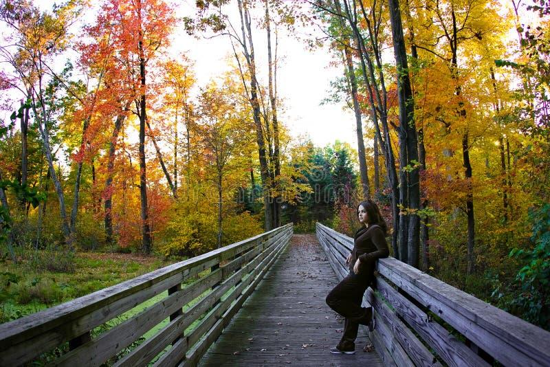 Download сезон падения стоковое фото. изображение насчитывающей листья - 6853978