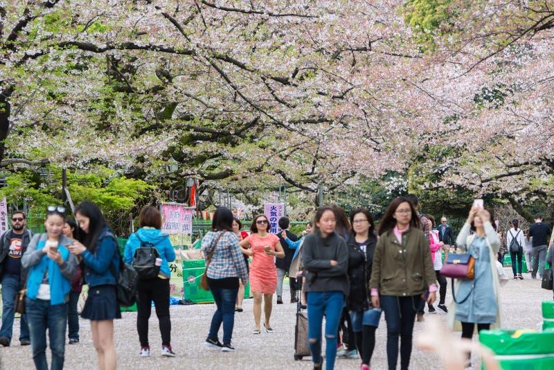 Сезон парка Ueno весной с вишневым цветом стоковая фотография