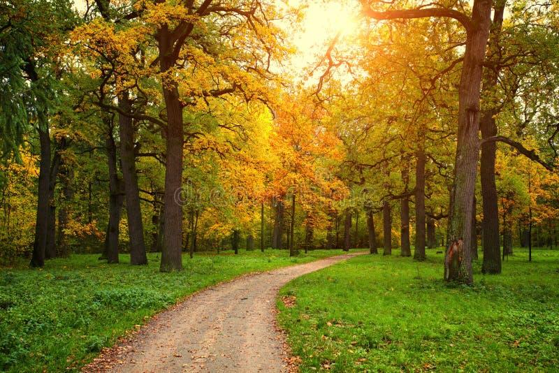 Сезон падения в парке с тропой стоковое изображение rf