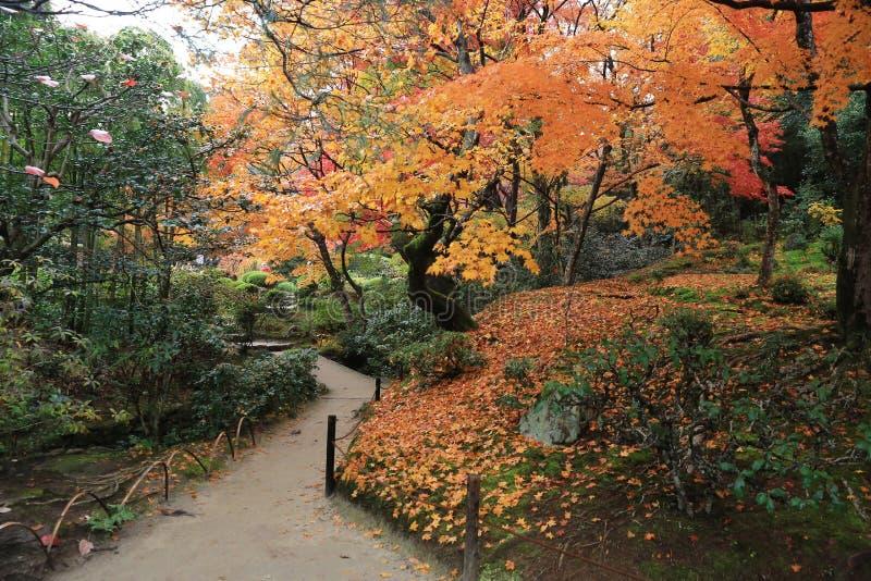 Сезон падения Shisen-садовничает стоковое фото rf