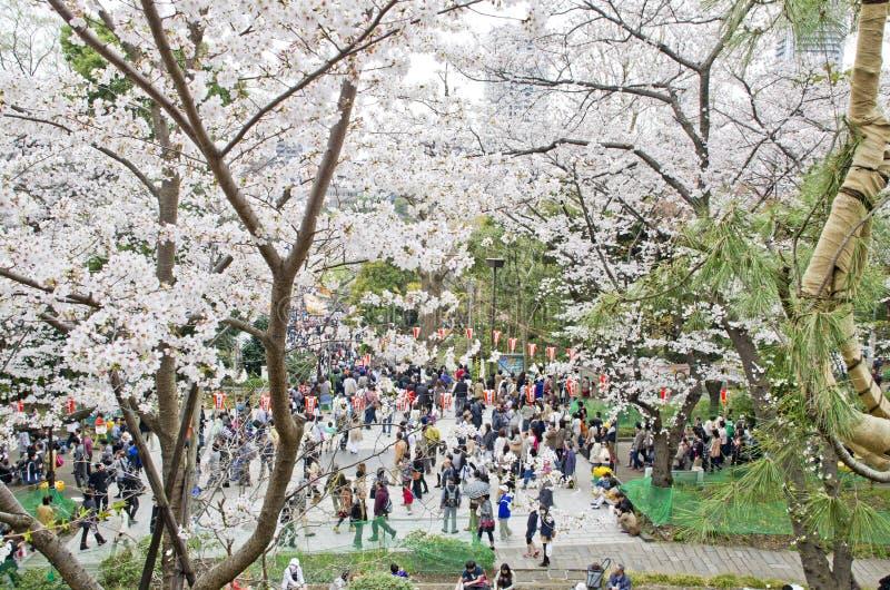 Сезон Сакуры в парке Ueno, Японии стоковые фотографии rf