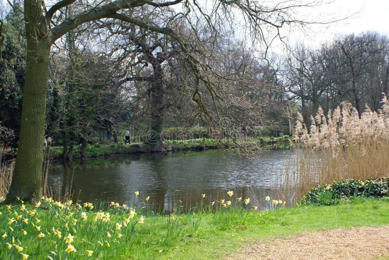 Сезон сцены берега озера весной, Англия стоковые изображения