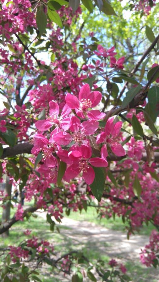 Сезон цветения стоковые изображения rf
