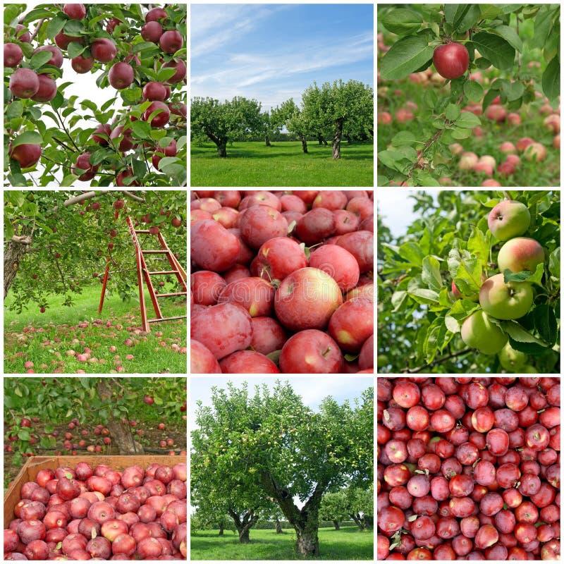 сезон яблока стоковое изображение