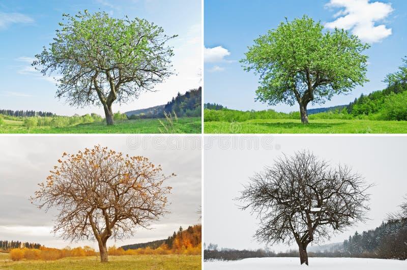 сезон стоковое фото rf