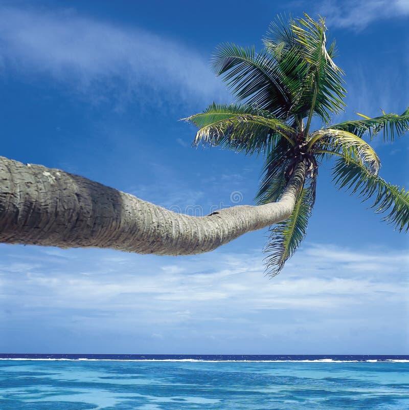 Сейшельские островы стоковые изображения