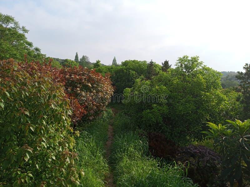 Секретная дорога окруженная деревьями стоковая фотография rf
