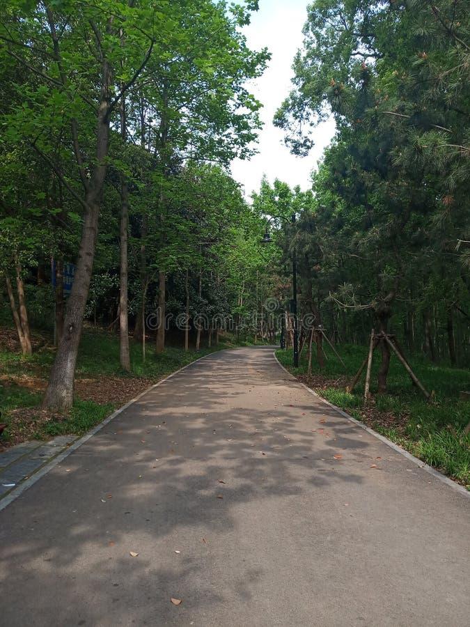 Секретная дорога окруженная деревьями стоковое изображение