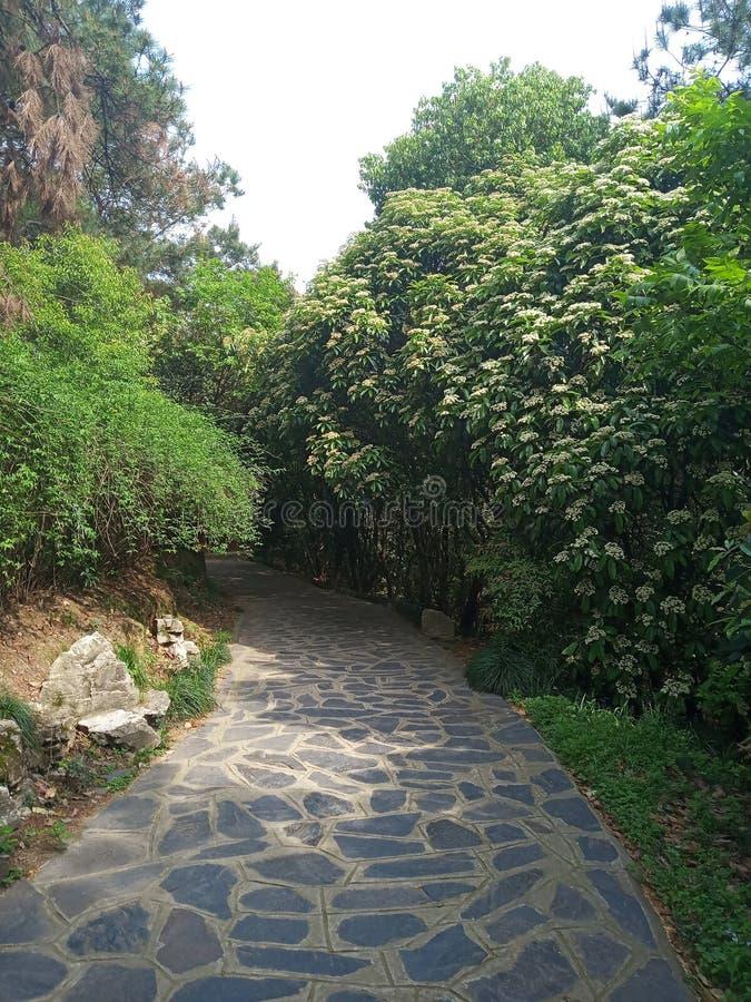 Секретная дорога окруженная деревьями стоковые фотографии rf