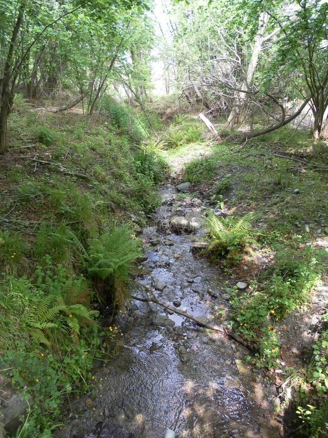 Секретное река в лесе стоковые изображения