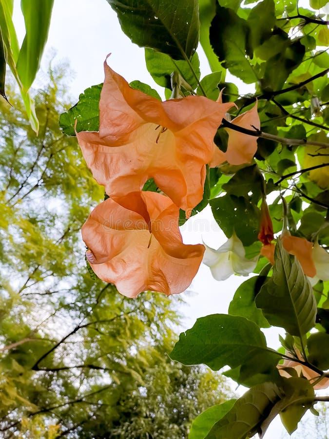 Секретный сад стоковые фотографии rf