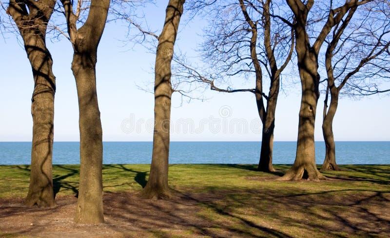 сексуальные стволы дерева стоковое фото rf