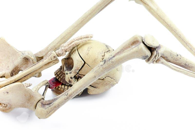 Секс хеллоуина, скелеты моделирует на белой предпосылке стоковая фотография rf