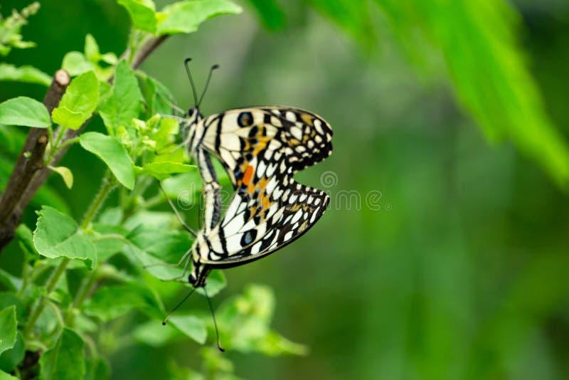 Селективный фокус на крыле или специальный пункт для красочной бабочки стоковая фотография