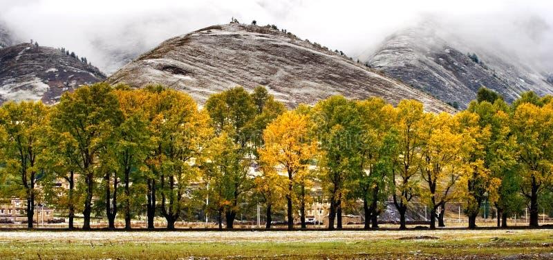 село взгляда снежка shangri la фарфора тибетское стоковое фото rf