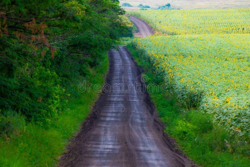 Сельская грязная улица в ландшафте сельской местности с полем солнцецветов стоковое фото