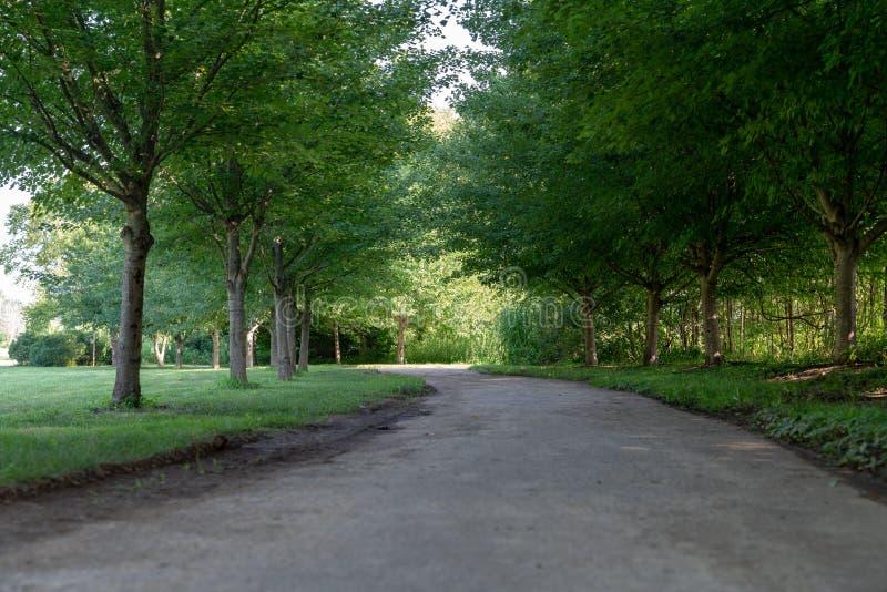 Сельская дерев-выровнянная дорога через зеленый парк стоковое изображение rf
