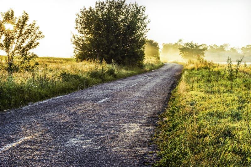 Сельская дорога между пышной растительностью в туманном утре в лучах восходящего солнца стоковая фотография rf