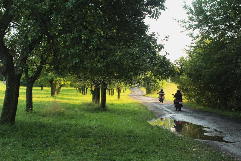 Сельская местность в лете - поездка стоковое фото rf