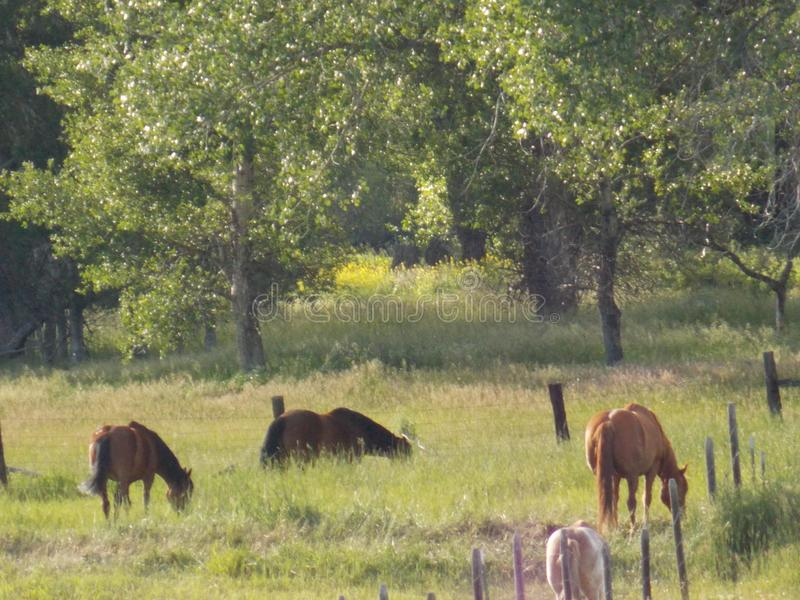 сельская местность пася лошадей стоковое изображение
