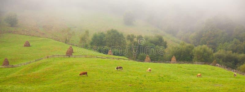 сельская местность apuseni стоковые изображения