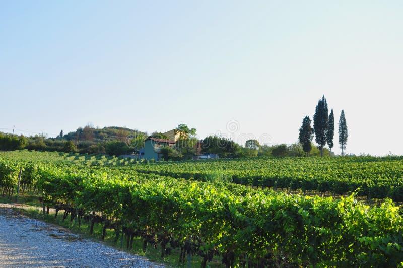 Сельская местность chianti сельского дома и виноградников стоковая фотография rf