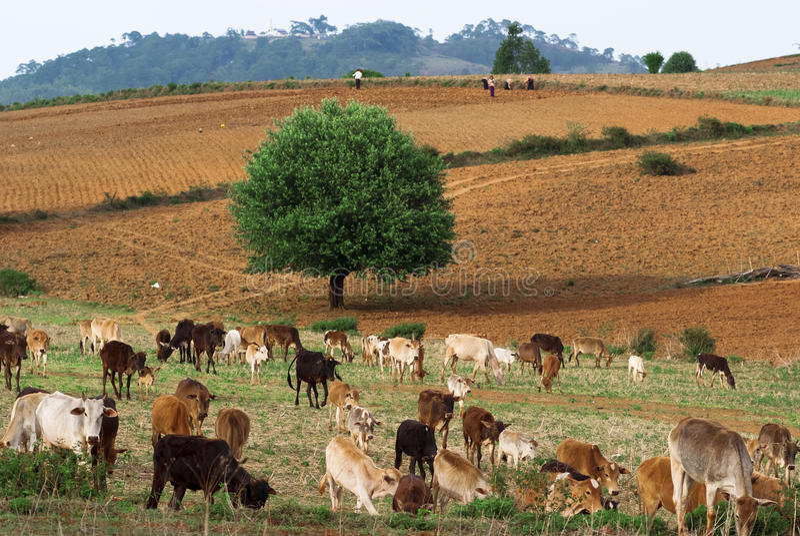 Сельская местность Myanmar стоковые фотографии rf