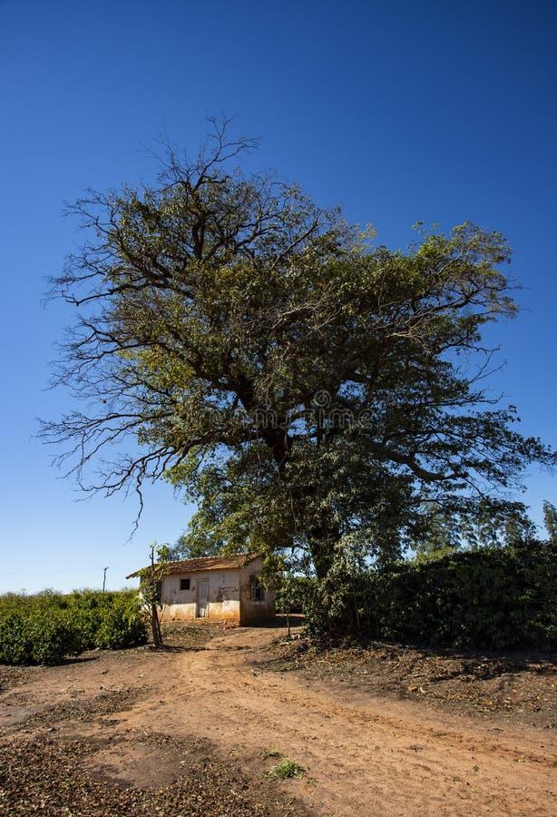 Сельский сельский дом среди аграрного края стоковые фото