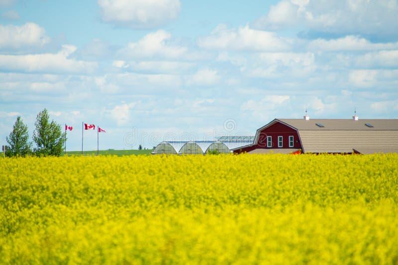 Сельский дом с канола полем в переднем плане с Канадой сигнализирует летание стоковое фото