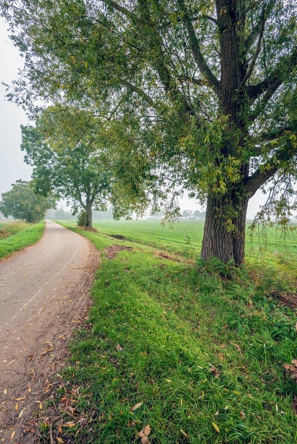 Сельский ландшафт в голландском польдере с высокорослыми деревьями вербы рядом с стоковая фотография rf